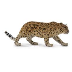 Amoer luipaard