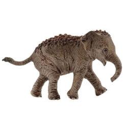 Aziatische baby olifant