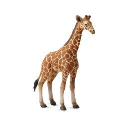 Giraf kalf