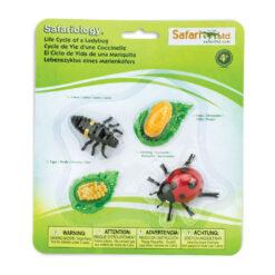 Safariology Lieveheersbeestje