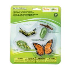 Safariology vlinder