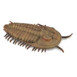 collecta redlichia rex trilobite