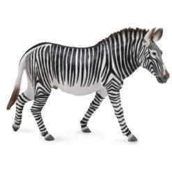 Collectagrevy's zebra