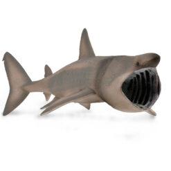 Collectabasking shark
