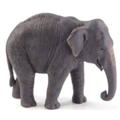 Mojo Asian Elephant