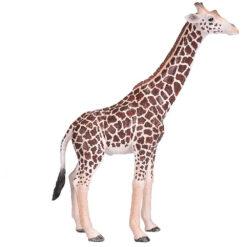 Mojo male Giraffe